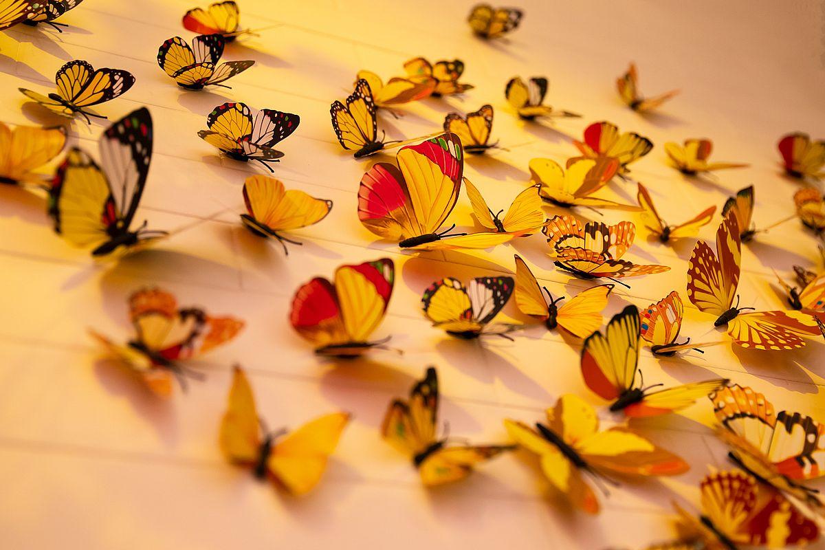 Wbeboid má rád motýly